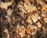 autumnleaveswithfrost