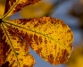 yellow-autumn-leaves