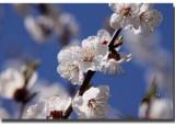 Non amare il florido ramo