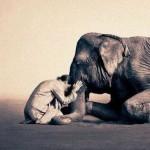 storiella-zen-elefante