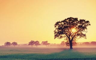 ws_Field_and_Tree_at_Sunset_1440x900-1 (Copia)