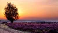 nature-sunset-tree-field-flowers-sky-landscape-dusk-1920x1080