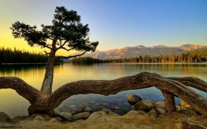 an-amazing-tree-on-the-bank-of-a-mountain-lake-at-sunset_1280x800
