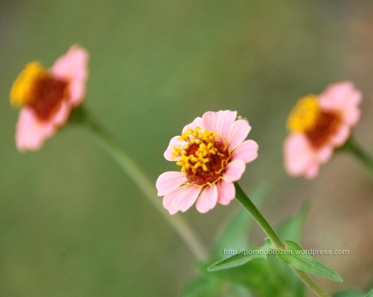 Sfondi desktop fiori