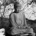buddha-aryaloka