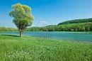 5176948-sul-lago-di-montagna-con-albero-isolato-di-fronte-prati-verdi