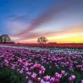 747161-beautiful-flower-field-wallpaper