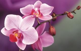 le-orchidee_NG1