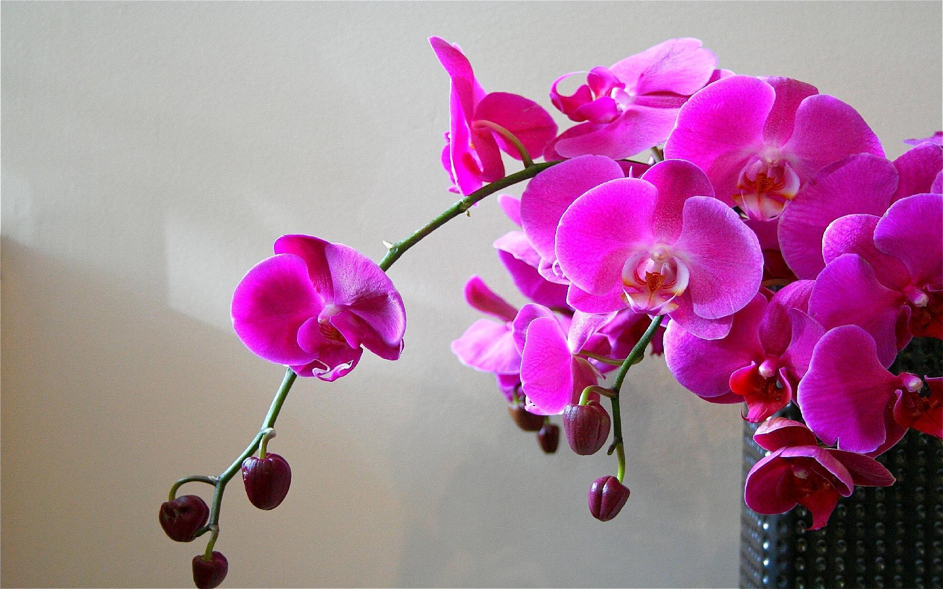 Фото красивые орхидеи