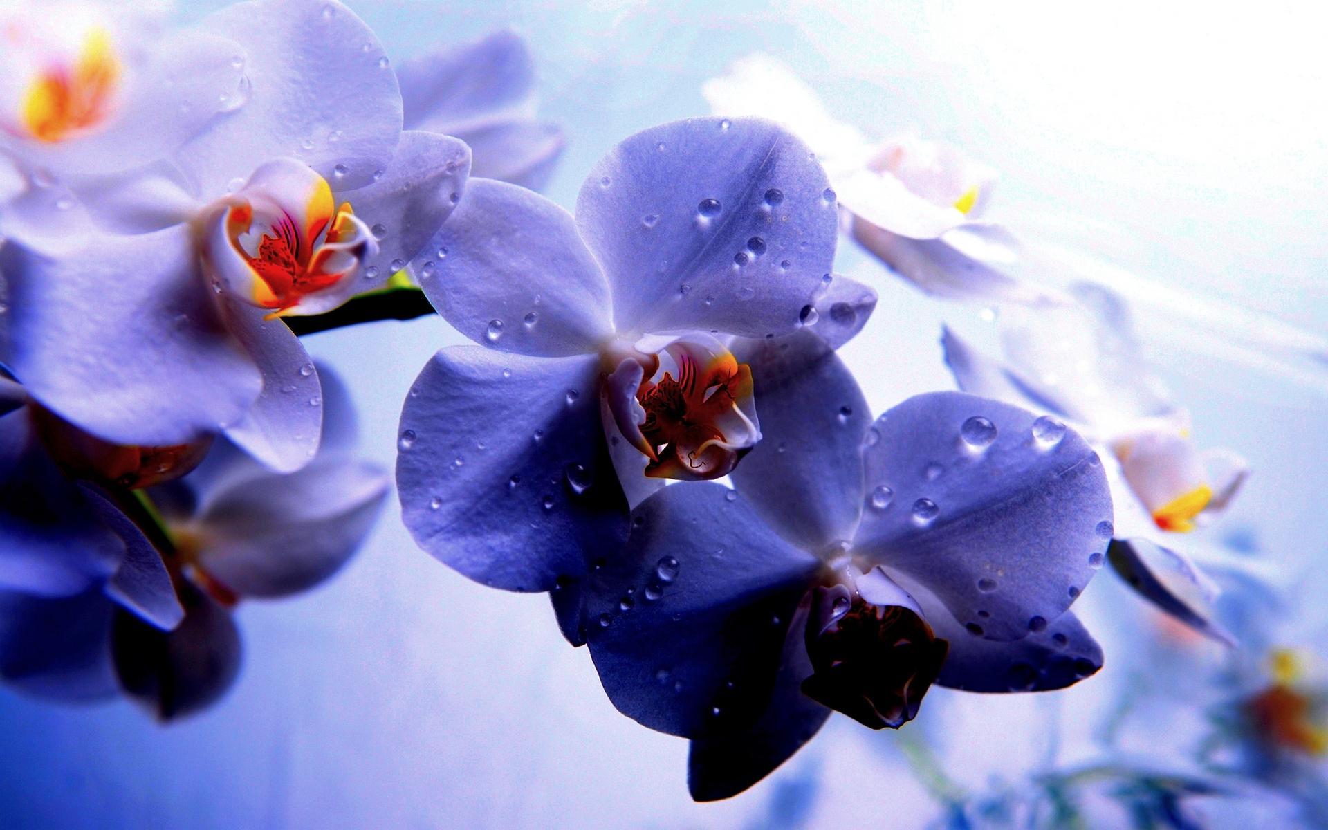 Zen Home Sfondi Desktop Orchidee Scarica Sfondi Gratuiti
