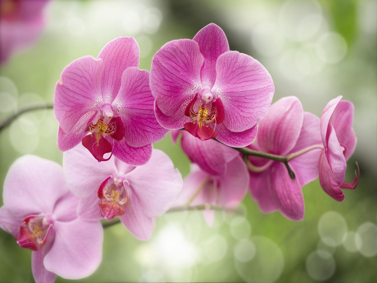 sfondi desktop orchidee scarica sfondi gratuiti