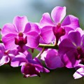 beautiful__orchid_flowers_with_back_sunlight_ii_by_a6_k-d5vlr51